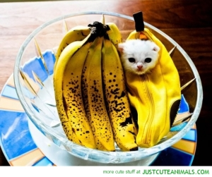 cute-animals-cat-kitten-banana-suit-fruit-bowl-pics