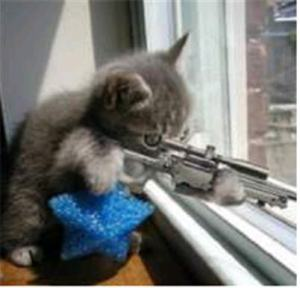 Funny Cats With Guns_1
